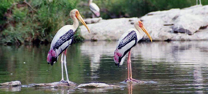 Rameshwaram Water Bird Sanctuary